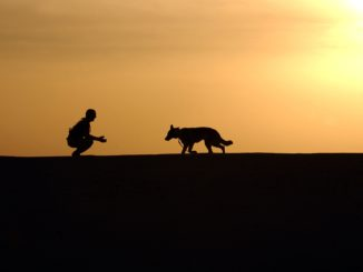 bienfaits de l'adoption d'un chien