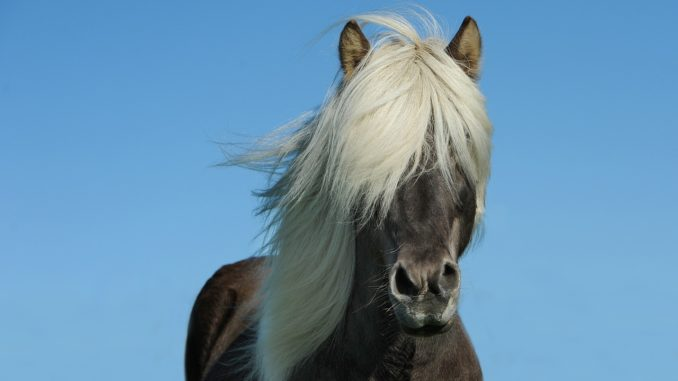 cheval de zoothérapie