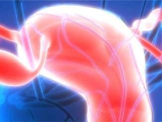 schema des ovaires